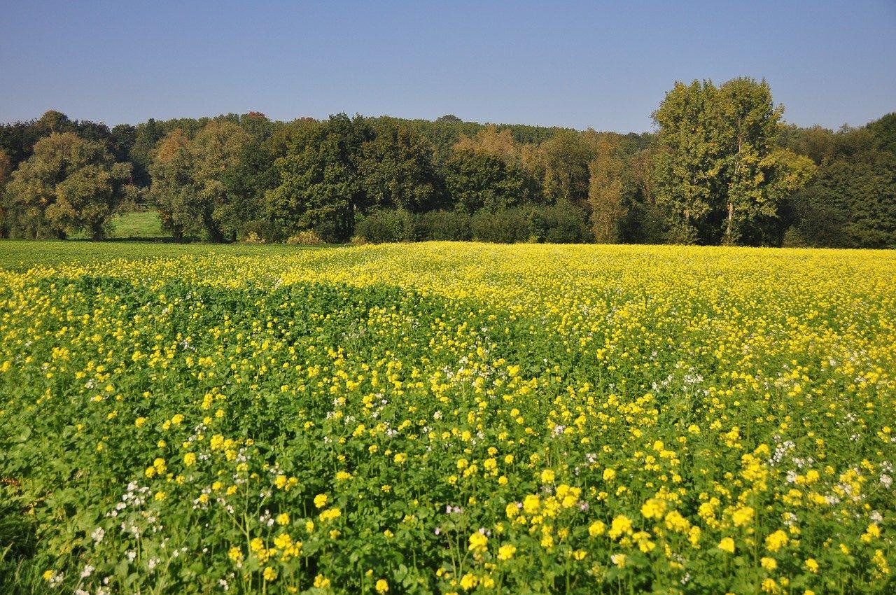 Vastgoed in de Vlaamse Ardennen floreert